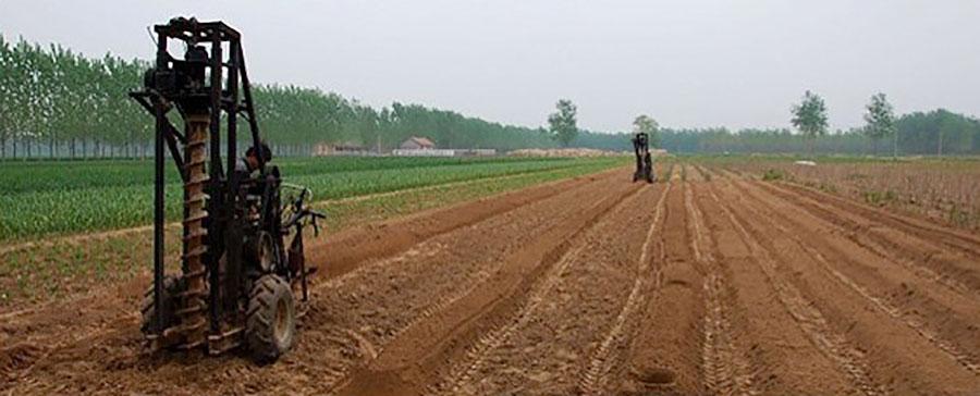 ジオスゲニン・ゴールドの原料である河南省産の懐山芋は、整備された農場で生産される