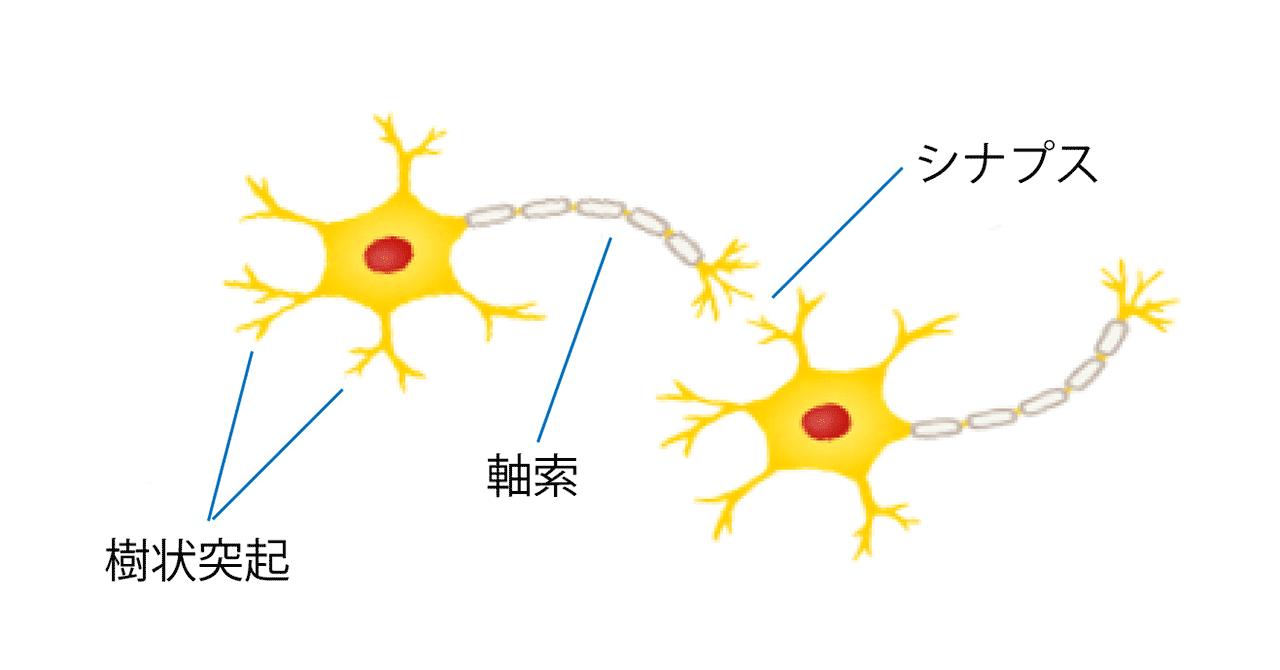 神経細胞(ニューロン)のしくみ